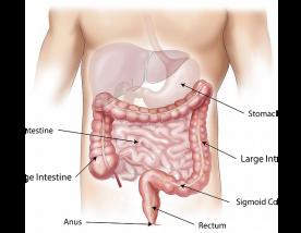 腸に免疫細胞が多い理由