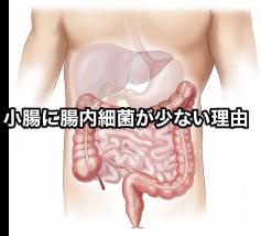 小腸に腸内細菌が少ない理由
