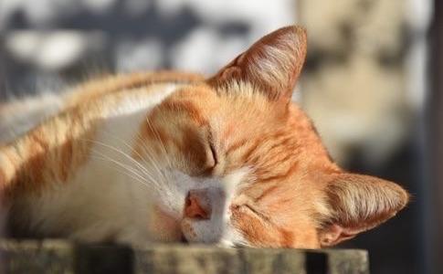 睡眠の質の高め方と効果についてのまとめ