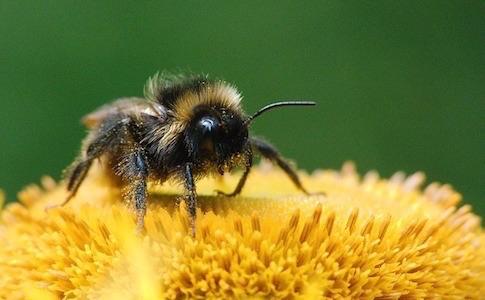 大谷義夫先生から学ぶ花粉症対策