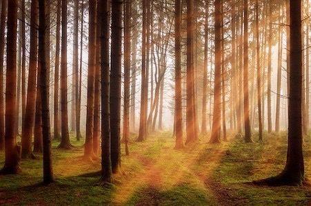 日光を浴びることによりセロトニンは生成される